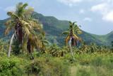 2 weeks on Mauritius island in march 2010 - 2616MK3_1624_DxO WEB.jpg