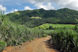 2 weeks on Mauritius island in march 2010 - 2791MK3_1798_DxO WEB.jpg