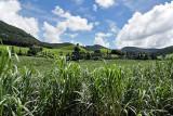 2 weeks on Mauritius island in march 2010 - 2795MK3_1802_DxO WEB.jpg