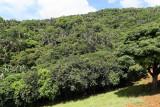 2 weeks on Mauritius island in march 2010 - 2812MK3_1819_DxO WEB.jpg