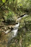 2 weeks on Mauritius island in march 2010 - 2845MK3_1852_DxO WEB.jpg