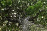 2 weeks on Mauritius island in march 2010 - 2852MK3_1862_DxO WEB.jpg