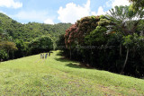 2 weeks on Mauritius island in march 2010 - 2854MK3_1864_DxO WEB.jpg