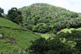 2 weeks on Mauritius island in march 2010 - 2876MK3_1887_DxO WEB.jpg