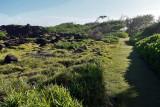 2 weeks on Mauritius island in march 2010 - 3079MK3_2108_DxO WEB.jpg