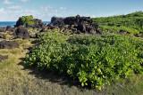 2 weeks on Mauritius island in march 2010 - 3080MK3_2109_DxO WEB.jpg