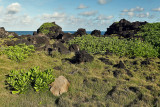 2 weeks on Mauritius island in march 2010 - 3081MK3_2110_DxO WEB.jpg