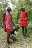 Sacrifice de deux chèvres par les Masaï, en l'honneur de notre visite