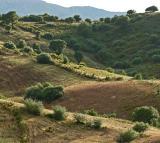 Région de Saint-Florent, découverte du cap Corse