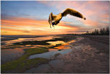 Altona Sunset Seagull