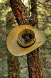 Holy Hat
