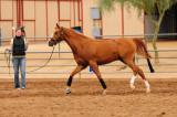 Saguaro Classic Arabian Horseshow