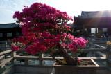 Bonsai against the sun