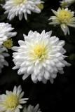 A flower is a flower