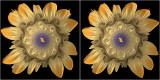 Julia flower #2 cross-eyed stereogram