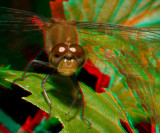 Dragonfly 6619.jpg