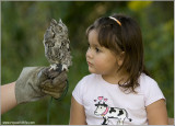 Maria and the Screech Owl