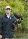 Goran and his Harris Hawk