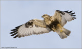 Rough-legged Hawk   3rd edit