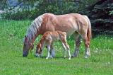 Horse Beauty 1