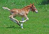 Foal on the Run 2