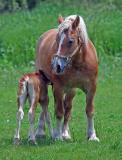 Hungry Foal 2