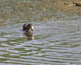 Smooth Otter - more breakfast