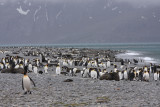 King Penguins and Fur Seals co-exist on the beach