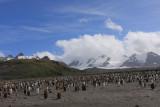 The rookery below Grace Glacier