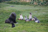 The perfect Fur Seal family group photo