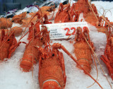 Western Lobster