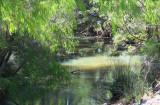 Stream at Brookland Valley