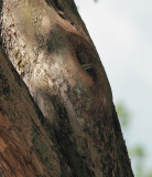Chick's bill showing at nest entrance