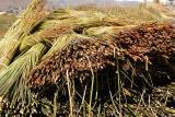 Totora reeds, Islas Flotantes
