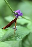 Cambridge Butterfly Conservatory, Cambridge, Ontario