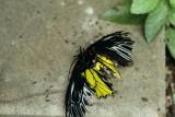 Pilot Error, Cambridge Butterfly Conservatory, Cambridge, Ontario