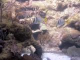 Aquarium, Xcaret Park, Xcaret, Mexico