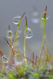 Pioggia sul muschio-Moss in the rain