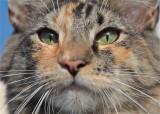 cats eye, akira laurie