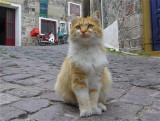 cats from Lesvos, Greece