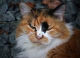 Cali the Cat