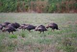 Yum Yum......Turkey time is coming!!!