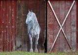 Horse Mural on Barn