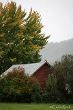 Barn in the Trees