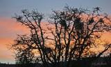 Sunrise through the tree