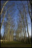 W-2008-02-24 - 0197 - Versailles - Alain Trinckvel.jpg