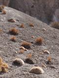 W-2009-08-19 -1903- Atacama - Alain Trinckvel.jpg