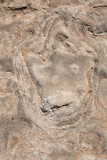 Dinosaur_Footprint#5_MG_2739.jpg