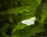 Fern and Butterfly a 06_27_10.jpg