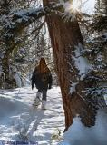 A Mid Winter's Hike 01_09_06.jpg